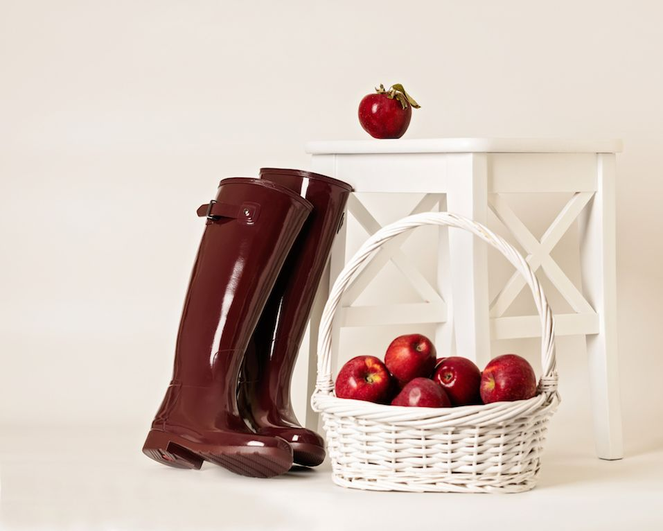 Autumn. The harvest of apples. Rubber boots Burgundy