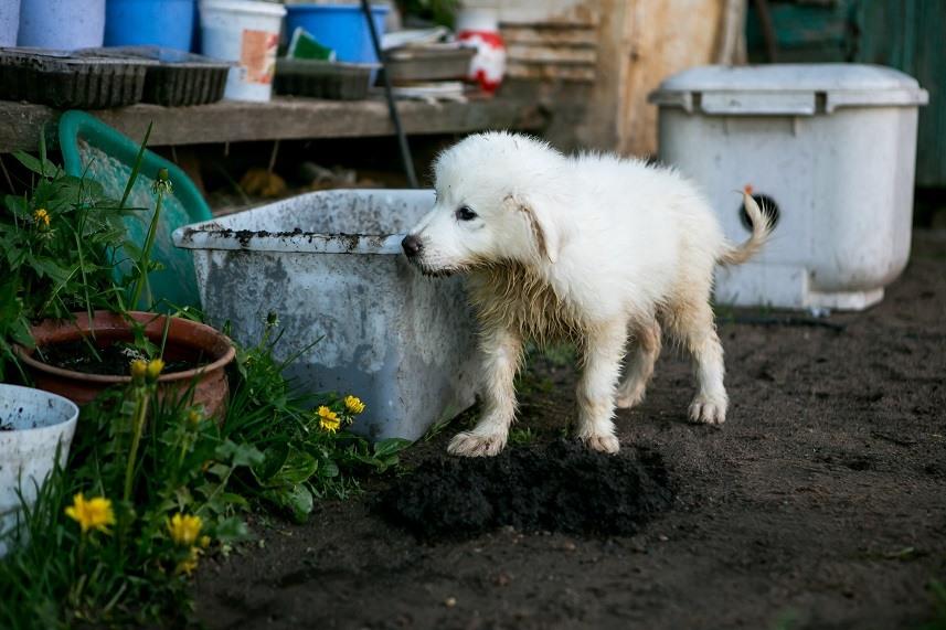 puppy snooping around a garden