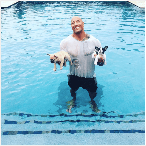 Dwayne The Rock Johnson with his French bulldogs