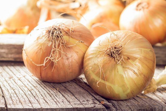Fresh onions, just picked, on wooden table. There are 3 onions freshly harvested, they are yellow orange in color.