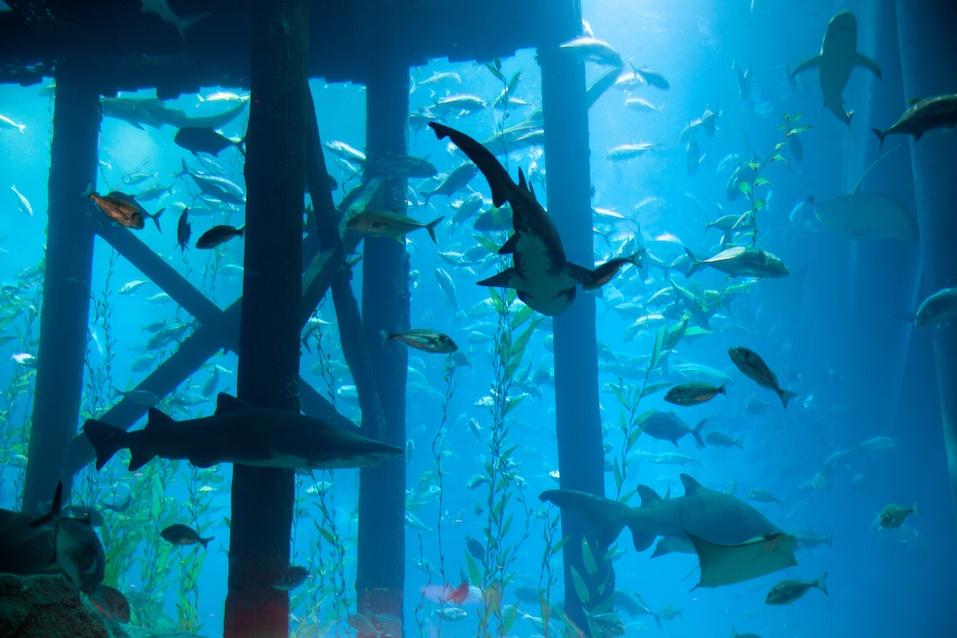 The Dubai Aquarium