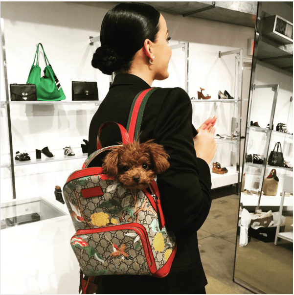 Katy Perry carrying her dog