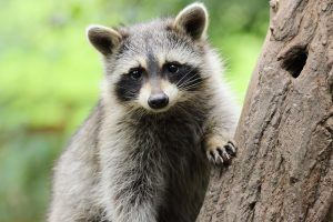 5 Animals Most Likely to Give You Rabies (and the Symptoms You Should Watch Out For)