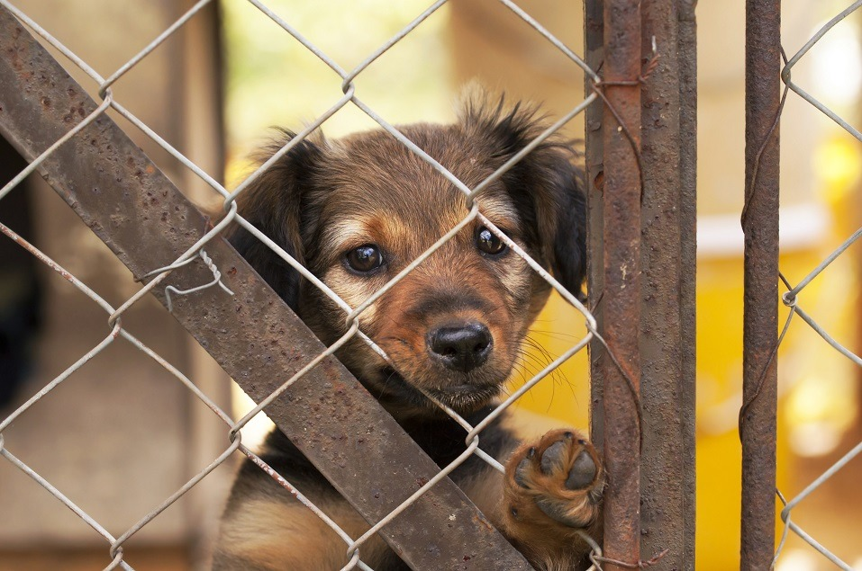 Puppy reaches through a fence.