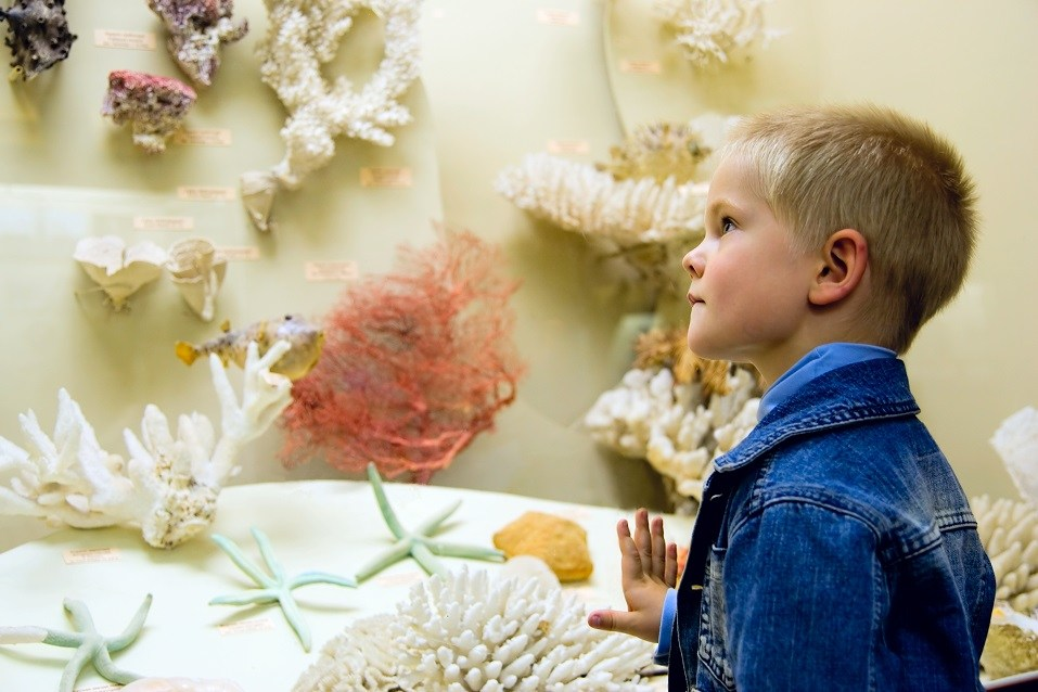 Small boy examine corals