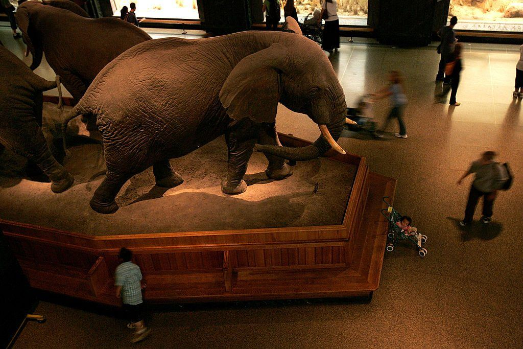 American Museum of Natural History elephant exhibit