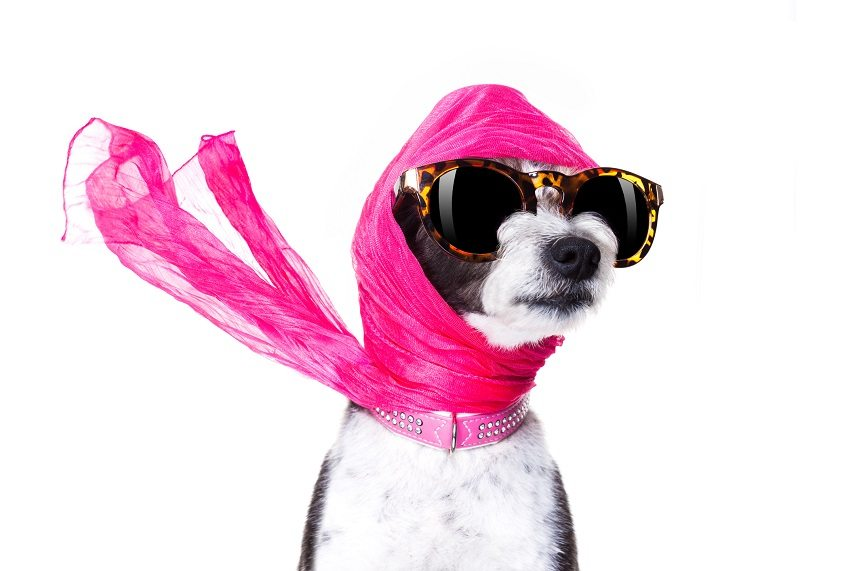dog with sunglasses and scarf