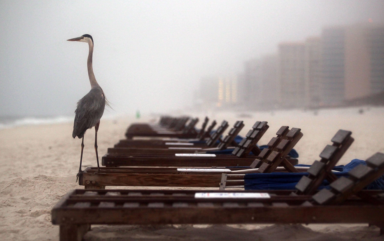 A crane stands on a beach chair in Orange Beach, Alabama