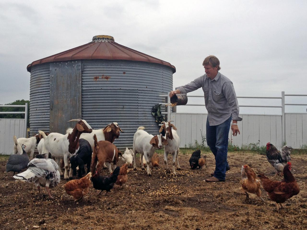 Chip Gaines feeds the livestock on his farm in a scene from Fixer Upper