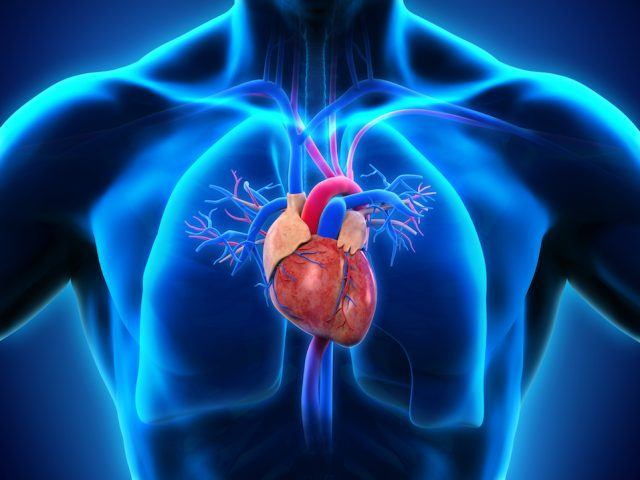 Heart conditions affect the way your whole body functions.