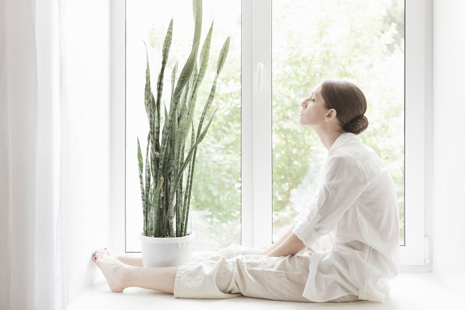 Woman and snake plant