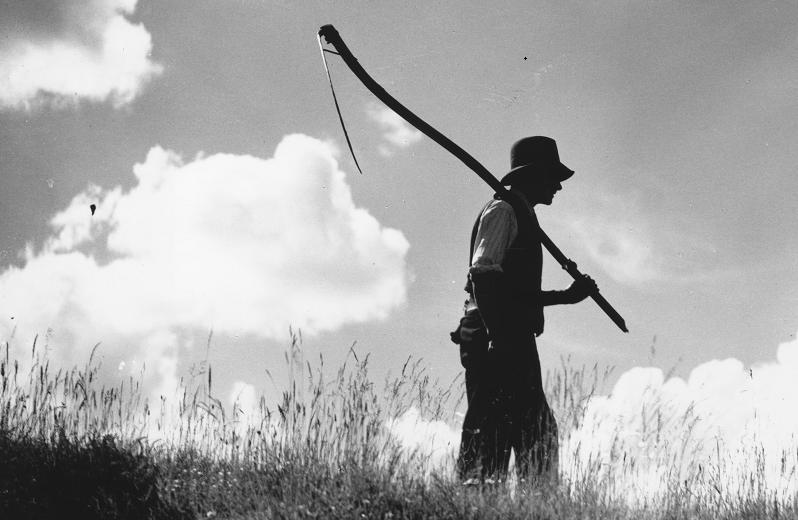 a farmer walks in a field