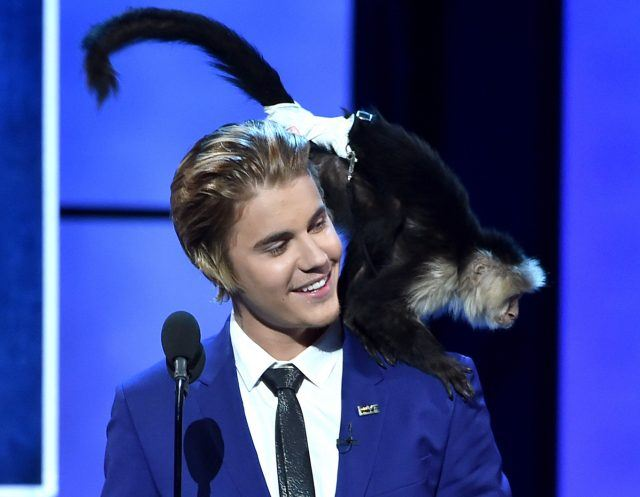 Justin Bieber, wearing a blue suit coat and black tie, smiles as a monkey crouches on his shoulder during the Comedy Central Roast of Justin Bieber.