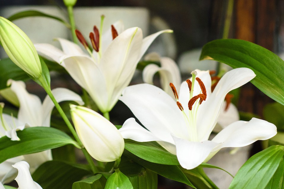 The Most Toxic Houseplants To Avoid If You Have Pets