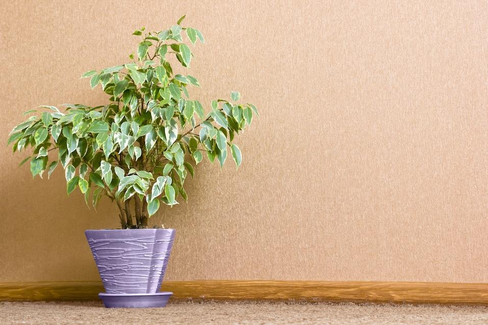 Green houseplant in flowerpot