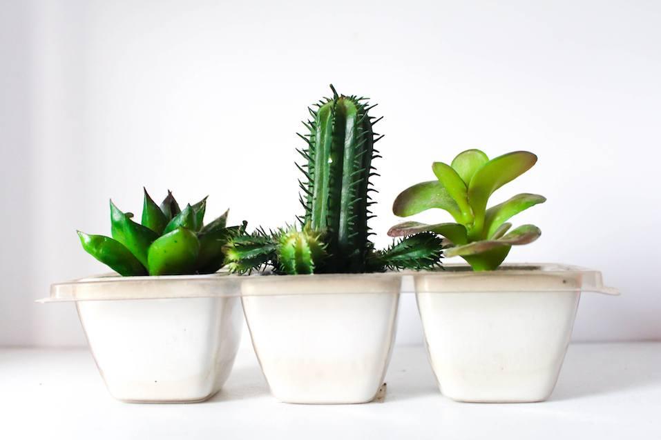 plastic succulents