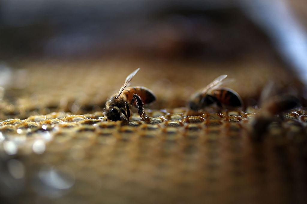 Honeybees at an apiary