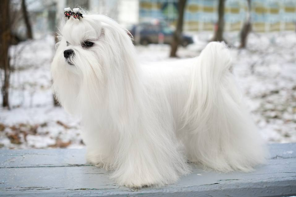 Easiest Dog Breeds To Own