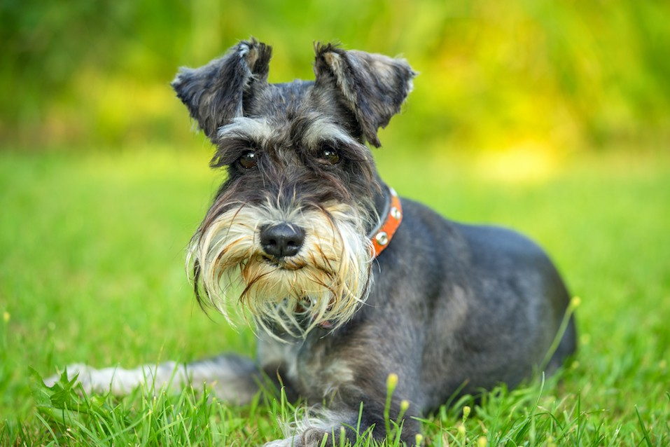 Best dogs for busy singles