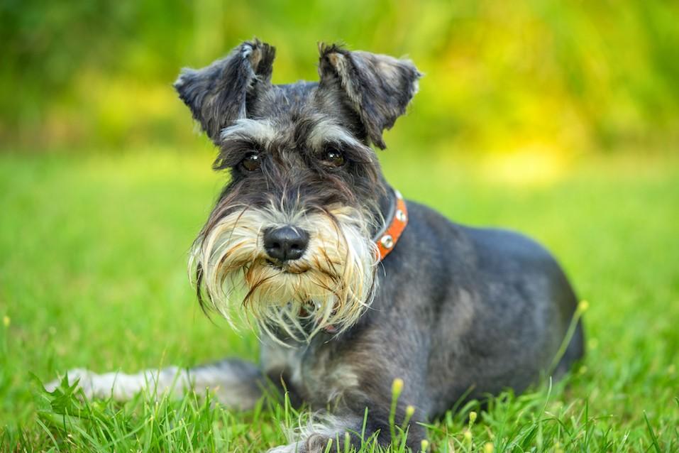 Moderate Energy Dog Breeds