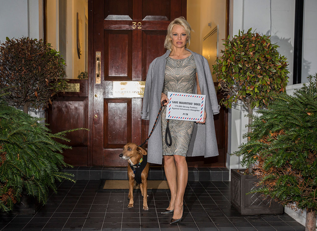 Pamela Anderson walks with rescued dog Zorro.