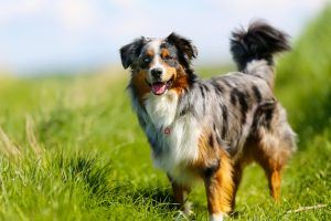 These Are the Easiest Dog Breeds to Housebreak