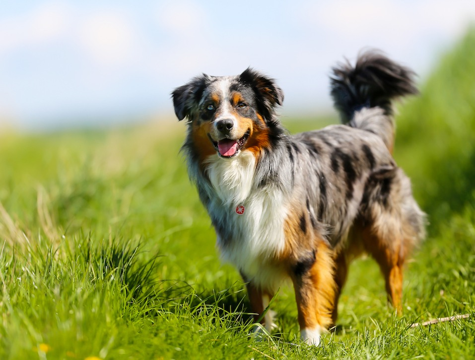 17 of the Most High-Maintenance Dog Breeds to Own