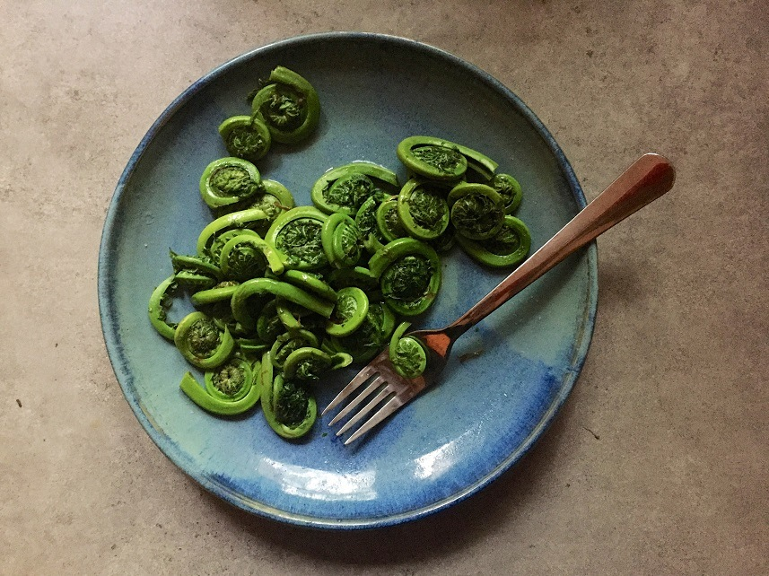 steamed fresh fiddleheads