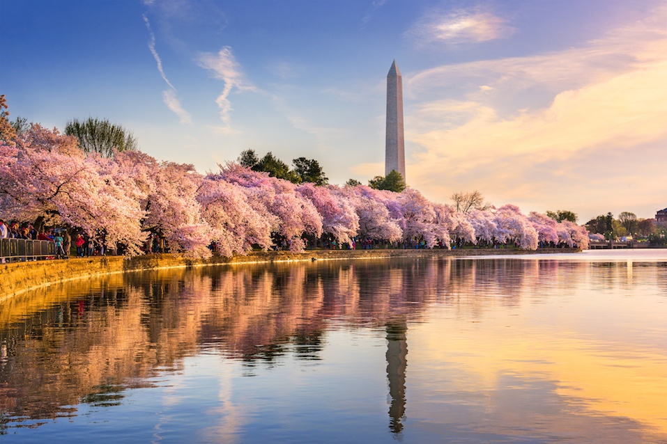 The Tidal Basin in Washington, D.C.