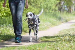 The Most Obnoxious Things You Could Ever Say to a Dog Owner