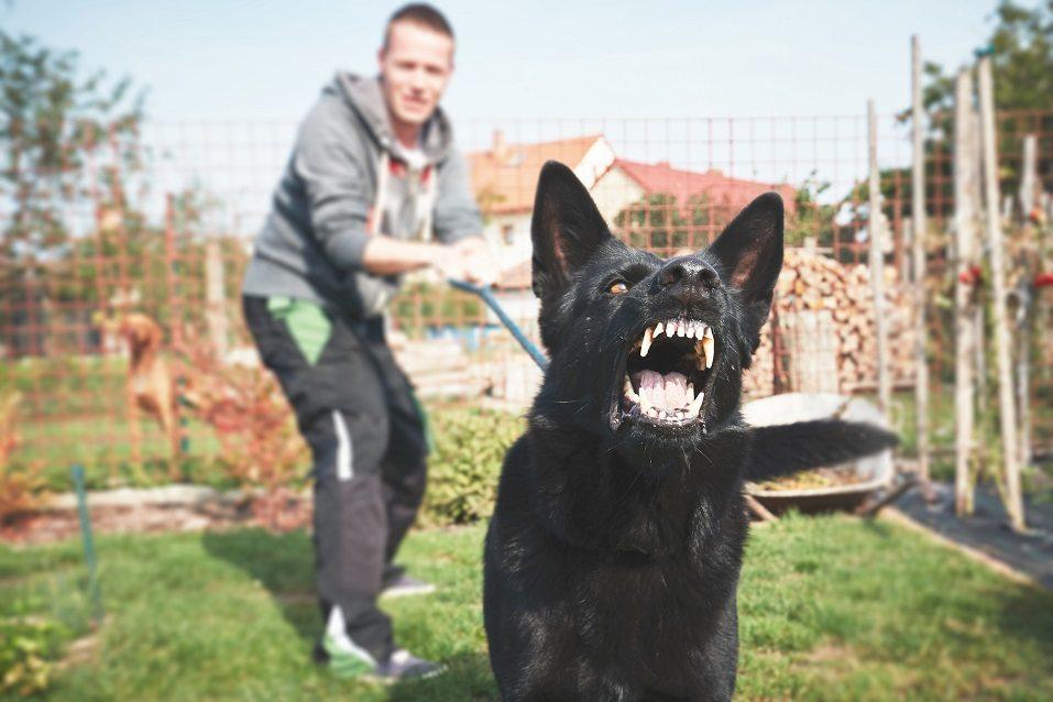 Aggressive dog is barking