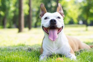 Experts Say These Easy Tips Could Help Your Dog Live Longer