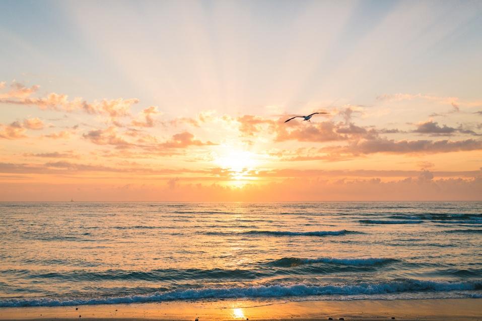 sunrise with bird on beach