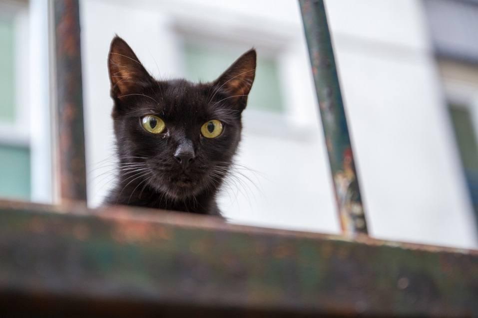 Cat looking at the camera
