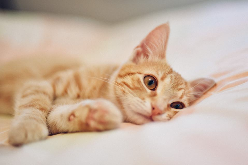 Little orange cat lying down in to the bed.