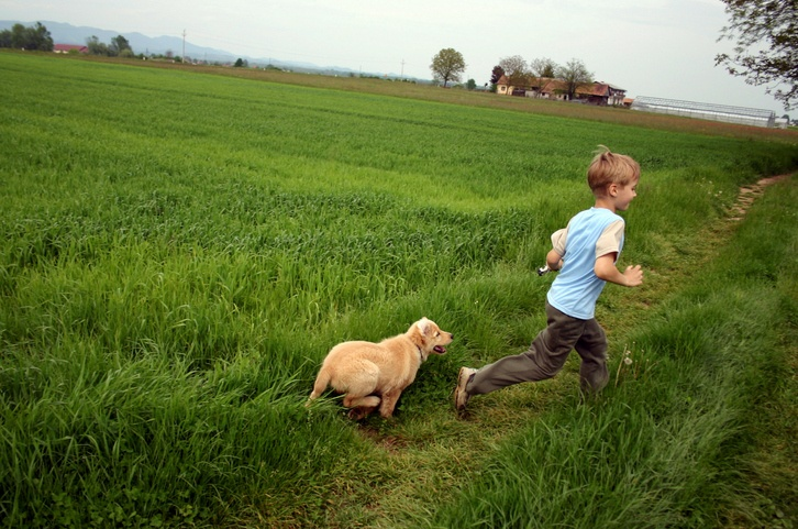 Boy and young golden retriever running in grass