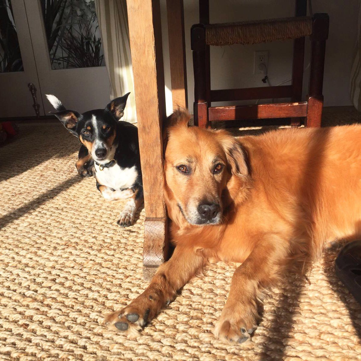 Hilary Swank's two rescue dogs, Kai and Rumi, lie in the sunshine