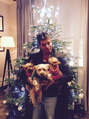 Simon Cowell poses with his rescue dogs in front of a Christmas Tree.