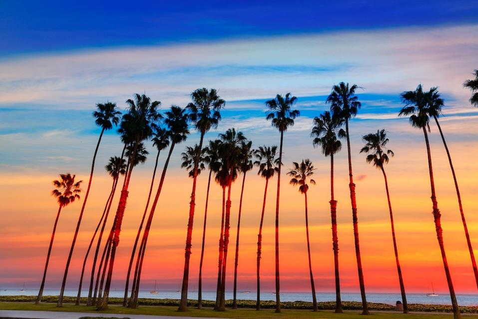 California sunset Palm tree rows in Santa Barbara US