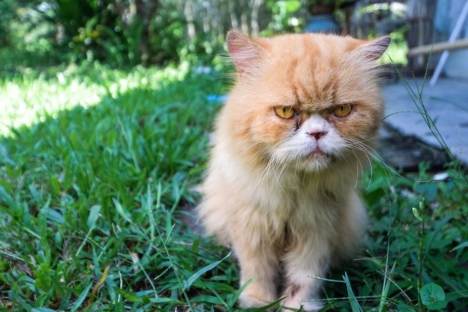 Cat at yard and frowning