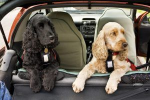 These Dog Breeds Are the Best for Getting Along With Other Dogs