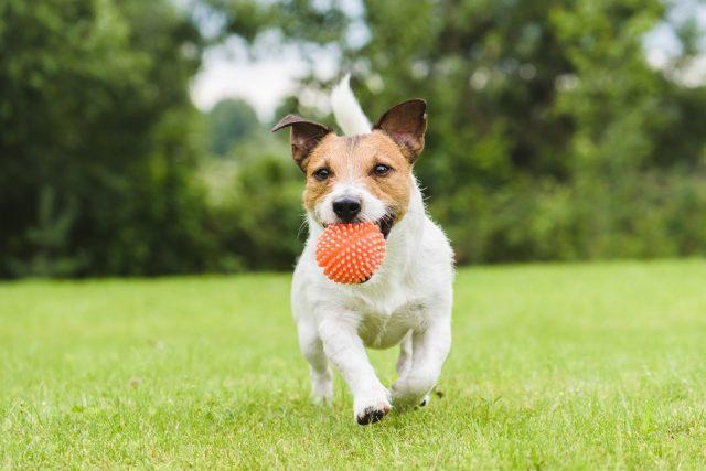 Dog owners should learn the signs of ringworm in dogs.