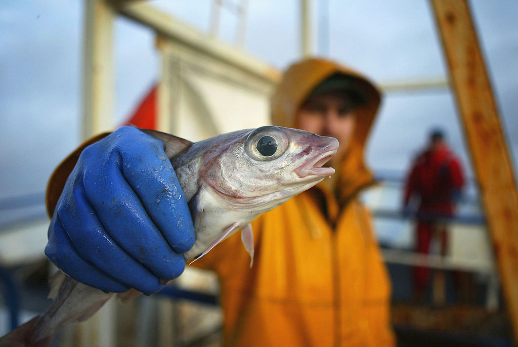 A commercial fisherman
