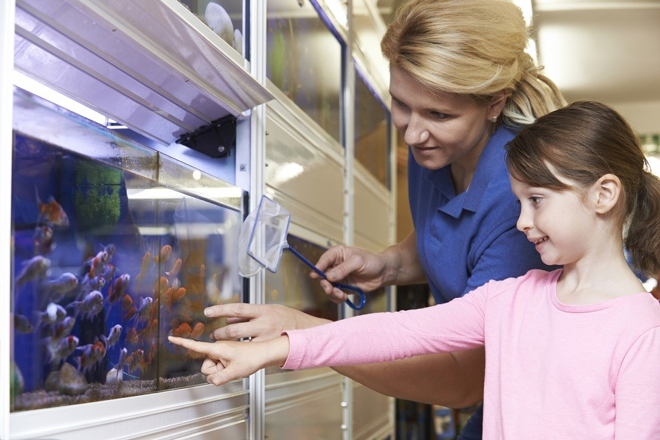girl with sales assistant looking at fish