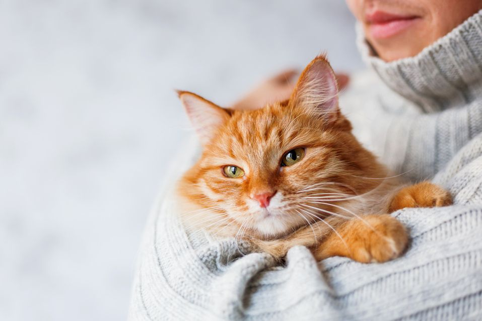 Man in knitted sweater holding ginger cat