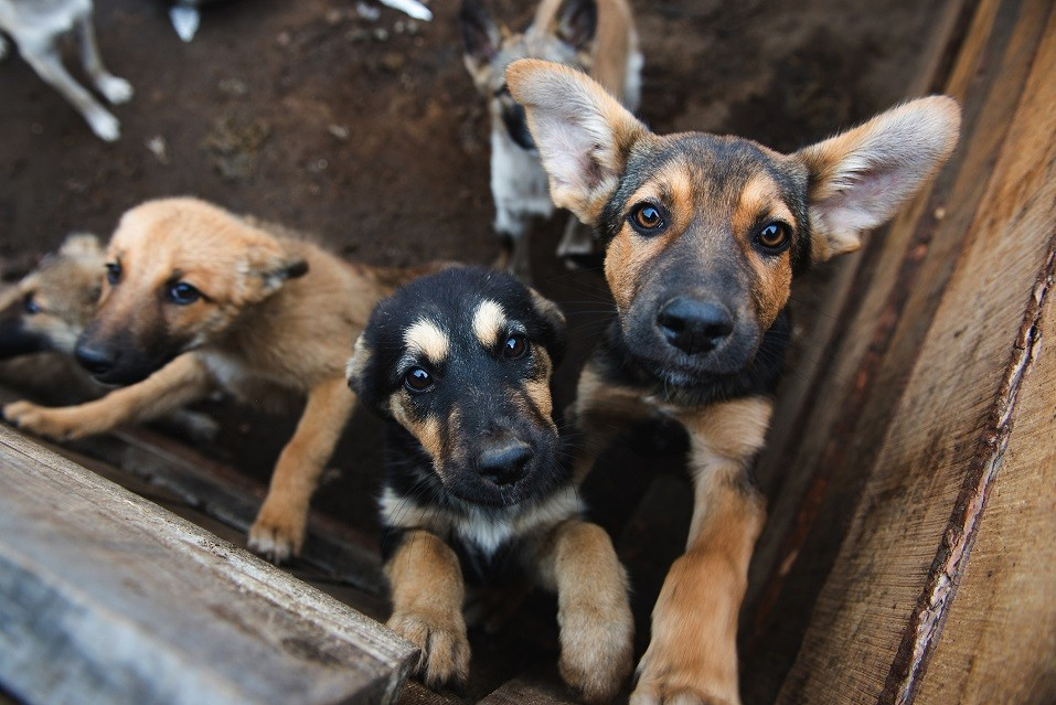 cute puppies locked in the cage