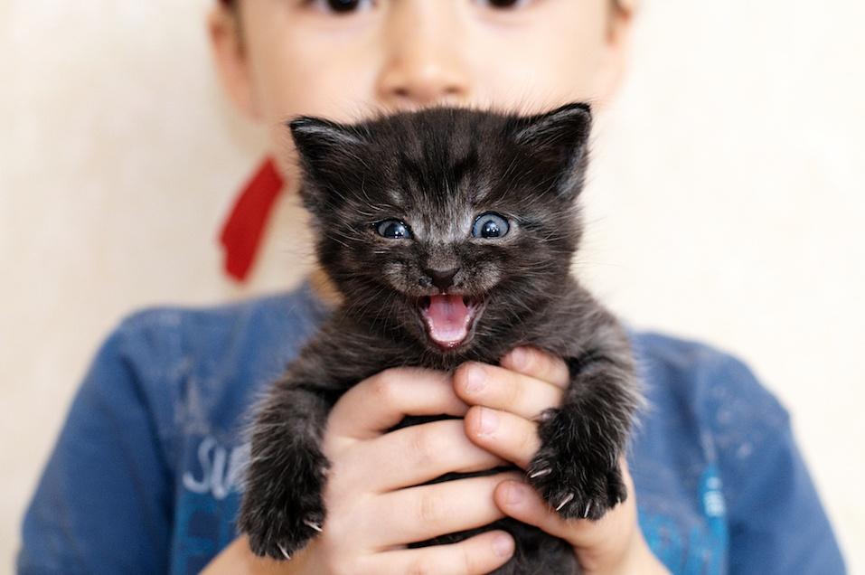 Mewing black kitten in boy's hands