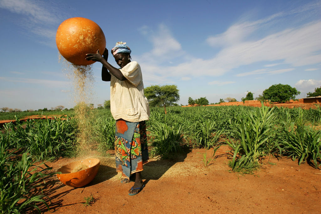 A woman removes the husks from grains of millet