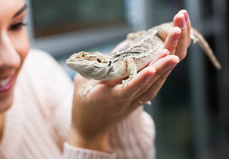 woman holding a lizard
