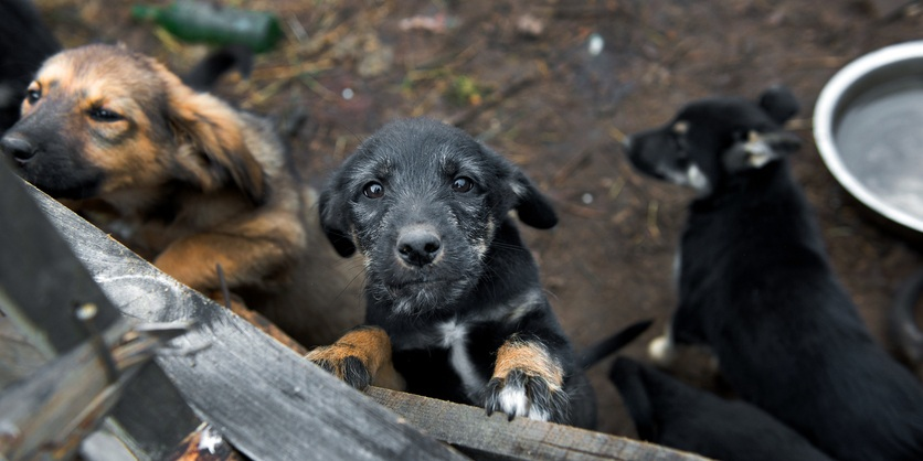 Homeless puppies in the shelter
